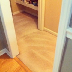 carpets cleaning fresh